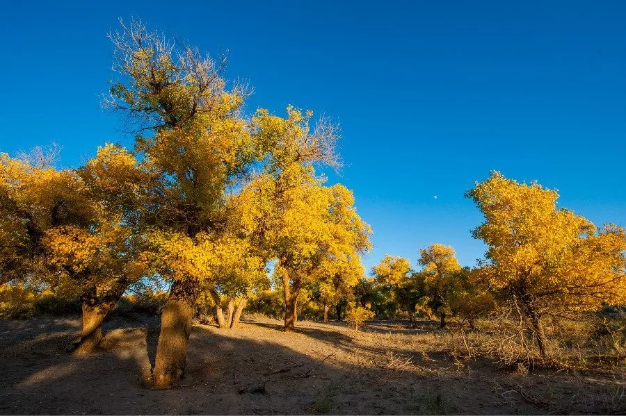 60.000 soldats plantent des arbres