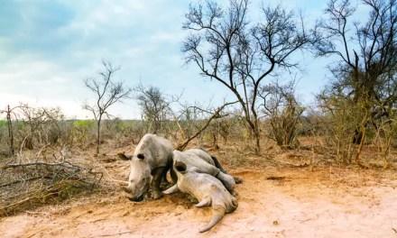 «Priorité à la faune» pour la Chine en Afrique