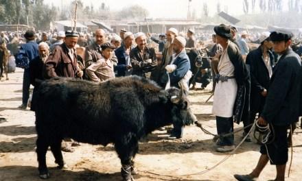 L'industrie du yak, nouvel voie de développement