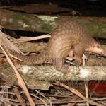 Ecriture d'un projet d'interdiction du commerce illégal d'animaux sauvages