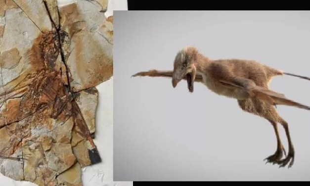 Découverte d'un dinosaure à ailes de chauve-souris