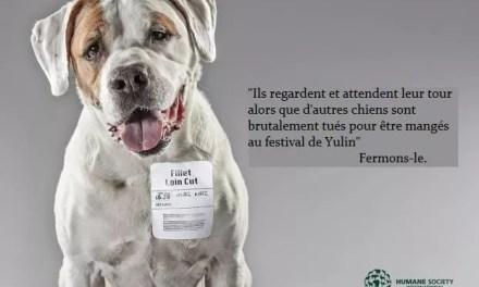 La viande de chien, un danger pour la santé