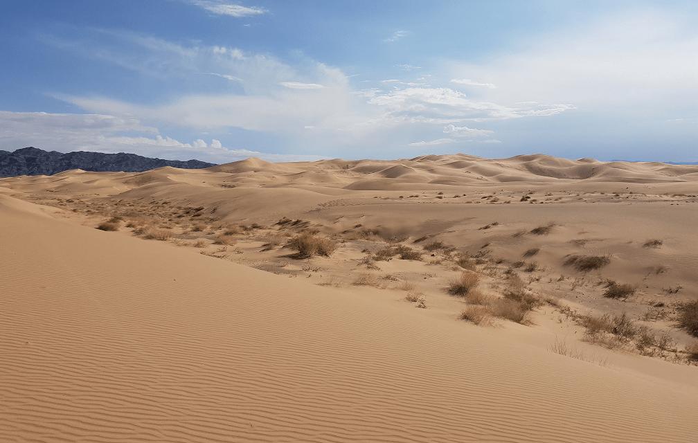 Le désert de Gobi développe un vin haut de gamme