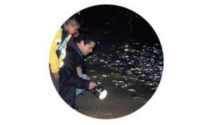 17 - 南加沙滩最美月光奇观:小银鱼抢滩!
