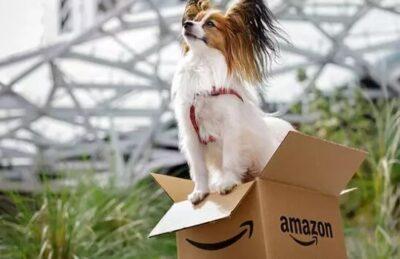 4 3 - 全美10大宠物友好公司排名 边上班边吸猫撸狗