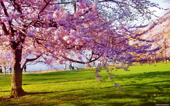 Spring and the liver in TCM