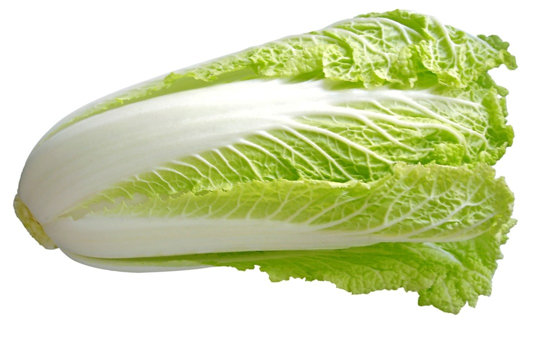 Chinese Cabbage – The King of All Vegetables