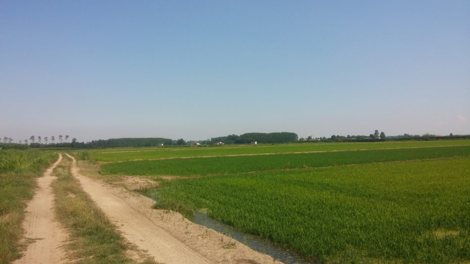 Risaie e sole in Pianura, tra Pavia e Mortara.
