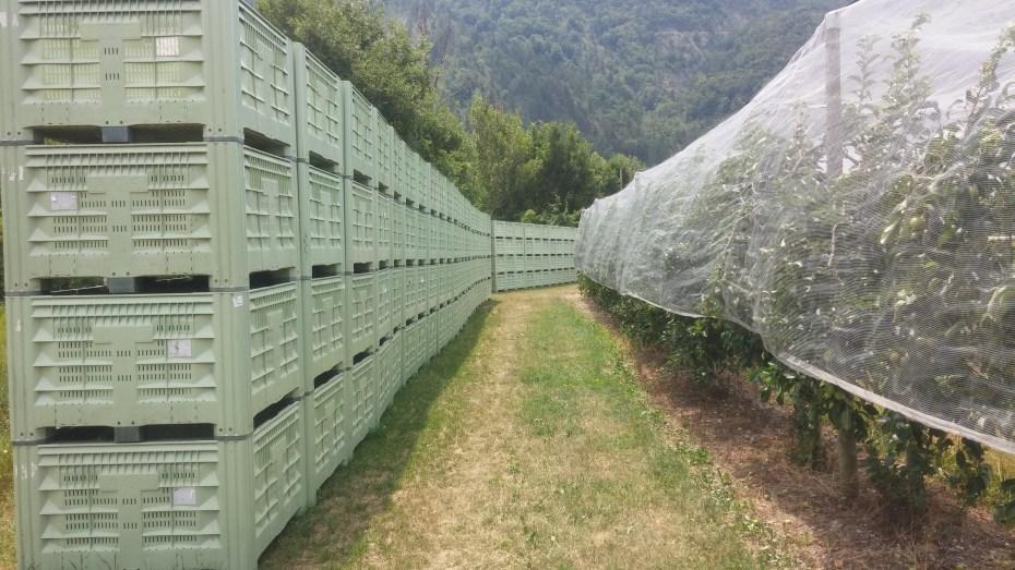 Passeggiata nel campo di mele