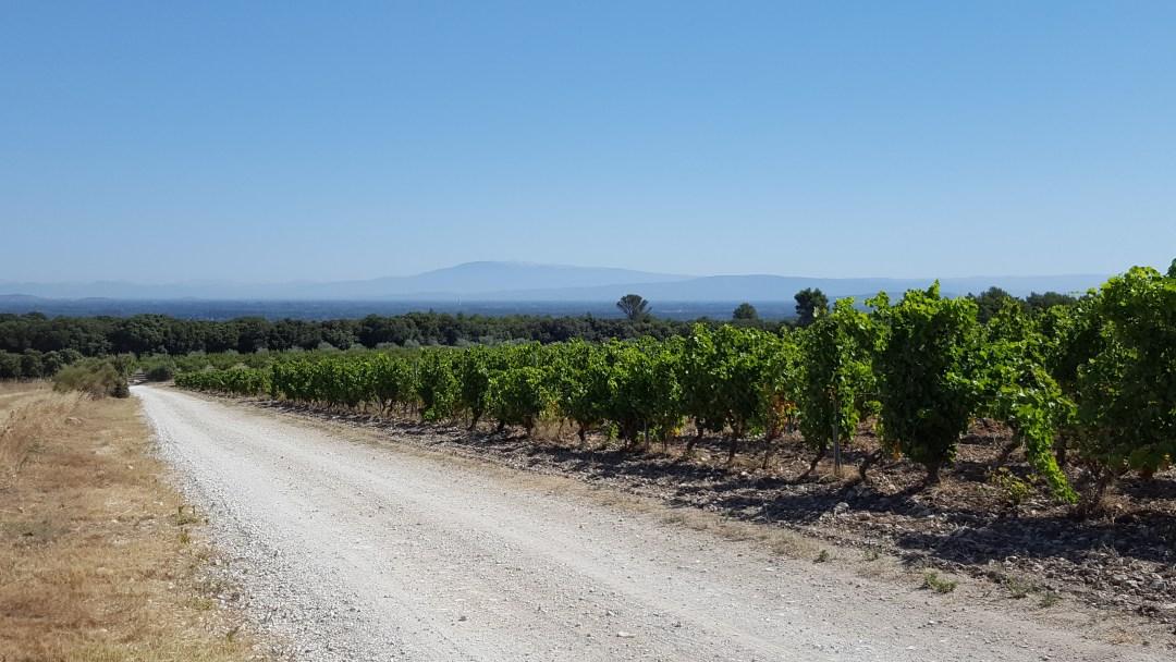 Il Mont Ventoux e le vigne: tra Orgon e Saint Remy de Provence