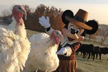 Pets Creature Turkeys