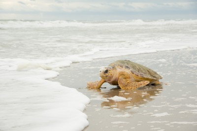 20140108_Canaveral Sea Shore Turtle Release_12