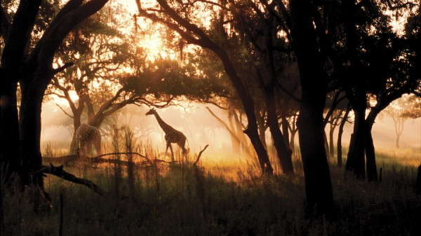 safari-dak-sunrise