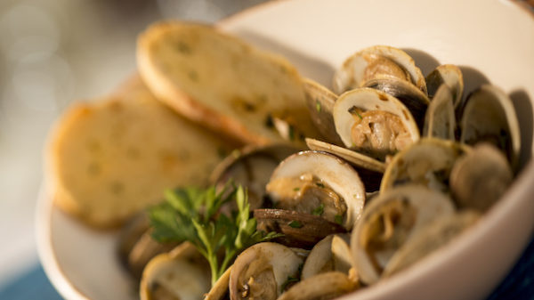 clams0224kp
