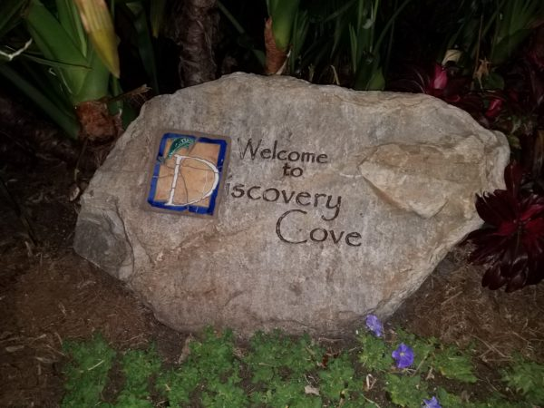 Discovery Cove's Paradise Nights Review