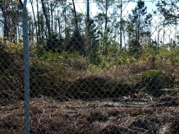 Photos: Disney is Clearing Trees to Begin Tron Construction 12