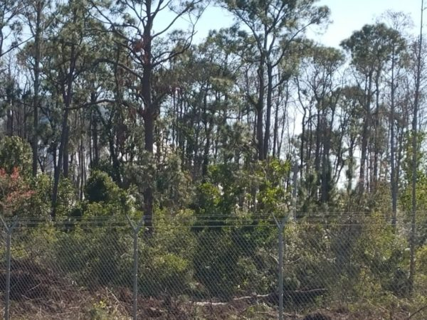Photos: Disney is Clearing Trees to Begin Tron Construction 5