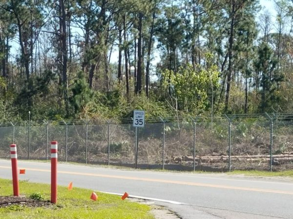 Photos: Disney is Clearing Trees to Begin Tron Construction 8