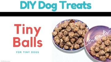 Tiny Balls for Tiny Dogs – {DIY Dog Meatball Treat Recipe}