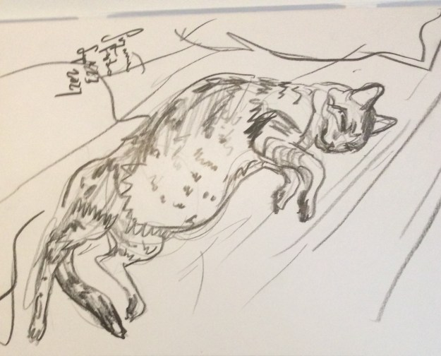 Cody resting sketch Sept 25 2021 Suzanne Forbes