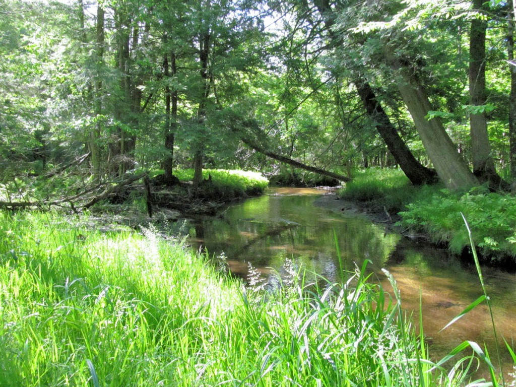 Quigley-Creek-Natural-Area