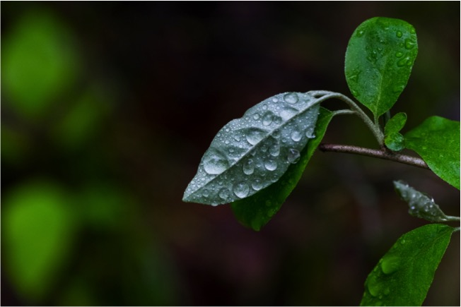 bundy-leaf-droplets-1
