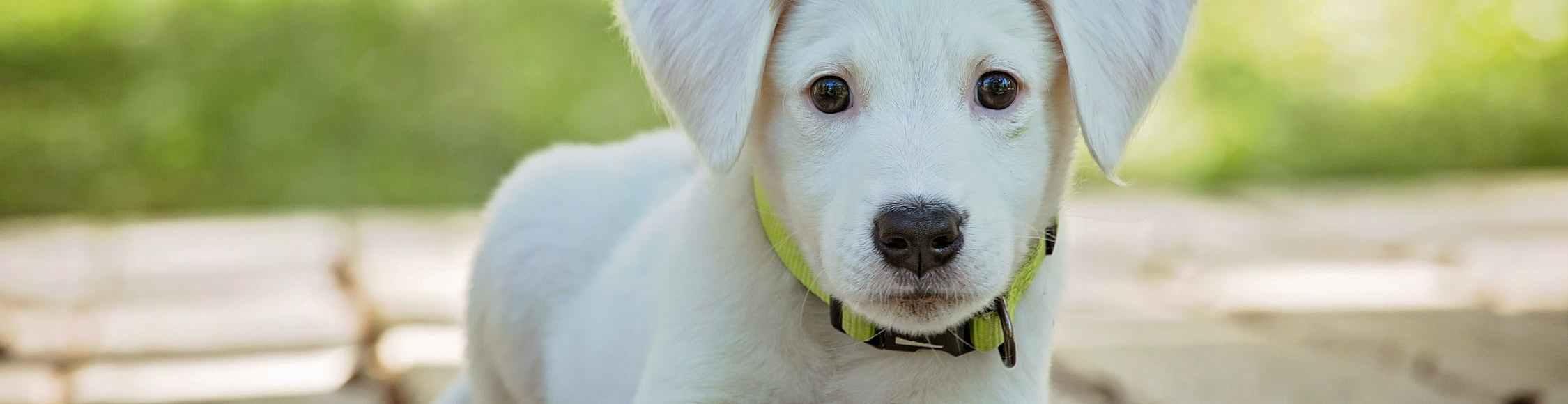 Hunde kosten Geld. Bei der Anschaffung und in der Unterhaltung.