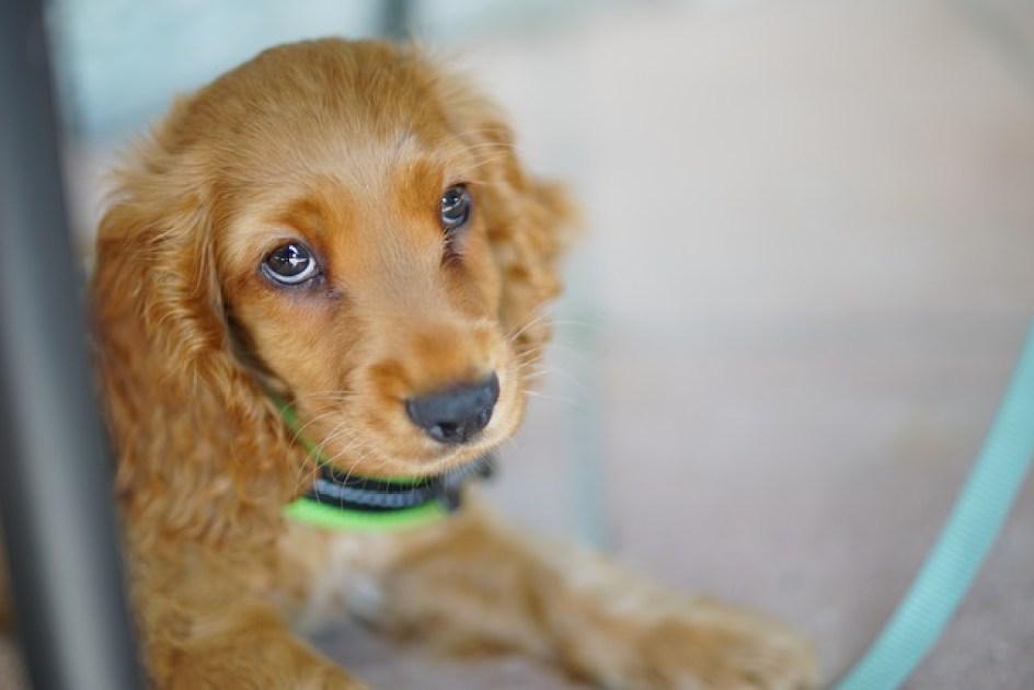 Berücksichtigen Sie zum Verhalten Ihres Hundes immer auch dessen Alter, Entwicklung und Erfahrungen.