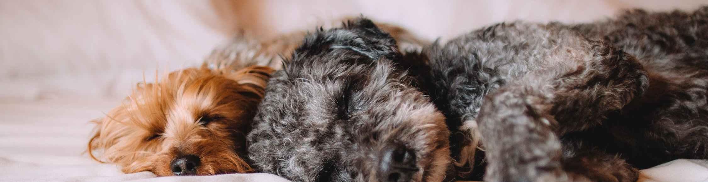 Die 19 besten Tipps wie Sie Ihrem Hund die Angst vor der Sylvesterknallerei nehmen