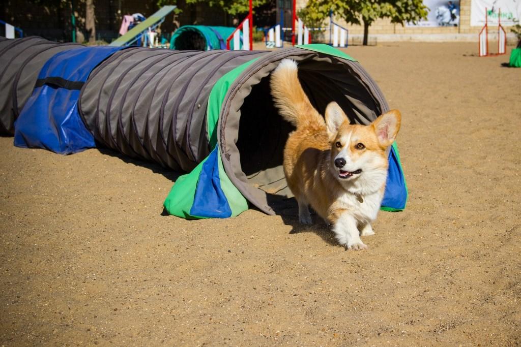 Hundesport in der Freizeit - einfach nur dabei sein, hier geht es weder um Punkte noch um Pokale