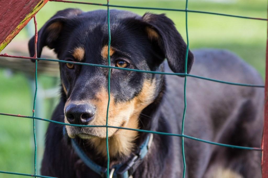 Dieses unbeschreibliche Gefühl, wenn Sie einen Hund aus dem Tierheim kaufen (retten)