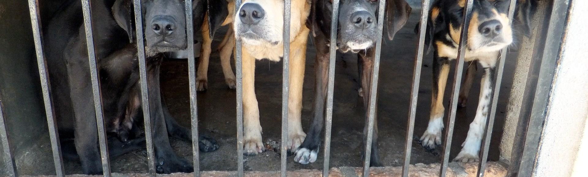Kaufen Sie keine Hunde od. Welpen von unseriösen Züchtern auf illegalen Tiermärkten