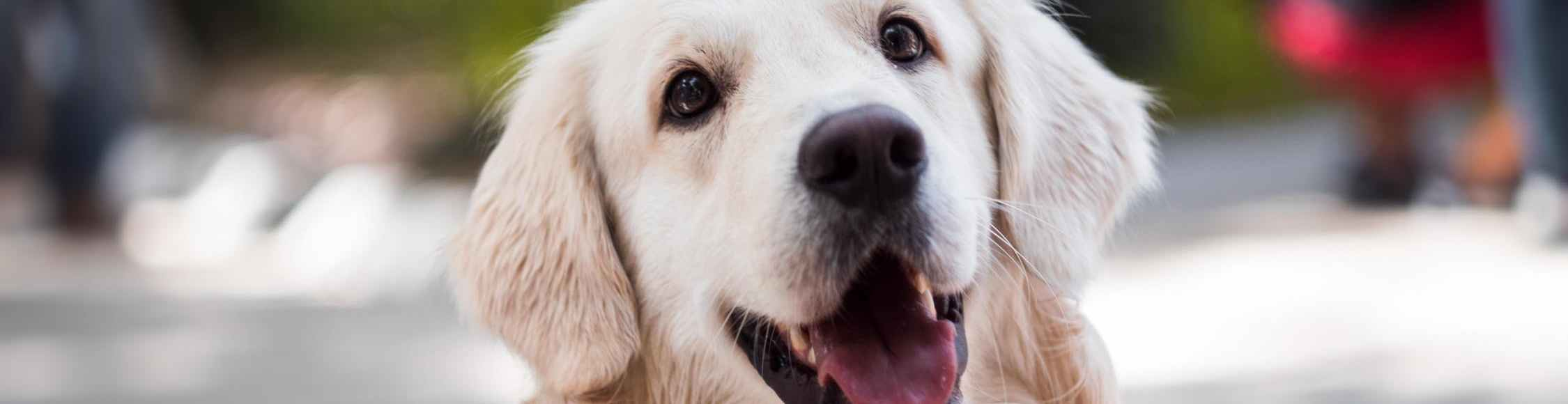 Dogs diet influences oral health