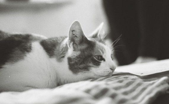 Mögliche Ursachen für das Auftreten von Schuppen bei Katzen
