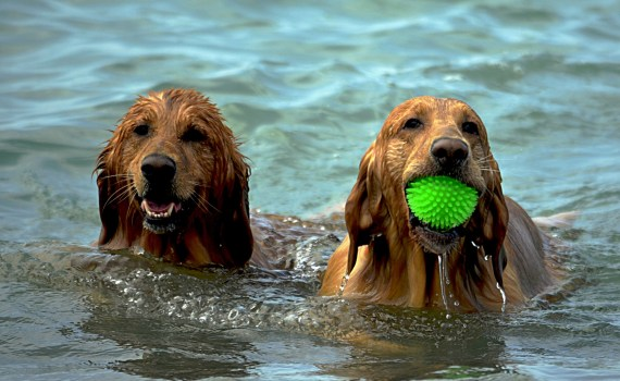 Urlaub mit Hund - Ihre Checkliste