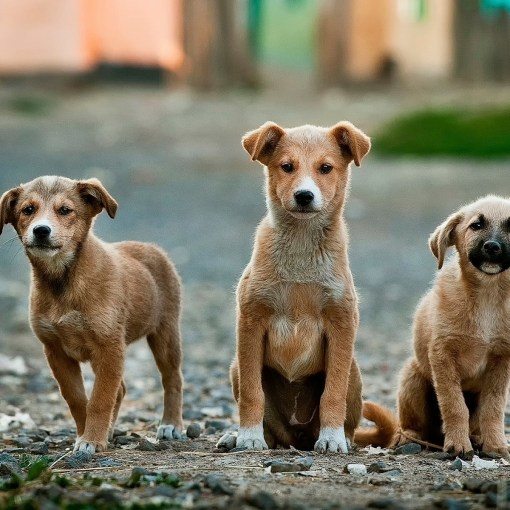 Nahrunsmittelallergie bei Hunden