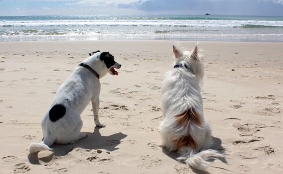 Urlaub mit Hund - Tiertransportunternehmen für Fernreisen mit dem Flugzeug
