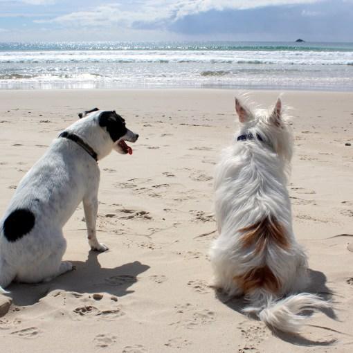 Urlaub mit Hund: Die Einreisebestimmungen für Hunde in die am meisten gewählten Urlaubsländer