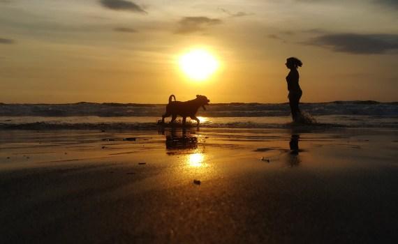 """Immer mehr Ferienhäuser und Hotels bieten inzwischen """"Urlaub mit Hund"""" an."""