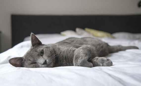 Was ist FeLV, die Katzenleukose, Syptome, Behandlung und Verlauf
