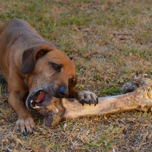 Wichtige Tipps zur Pflege der Zähne bei Hunden