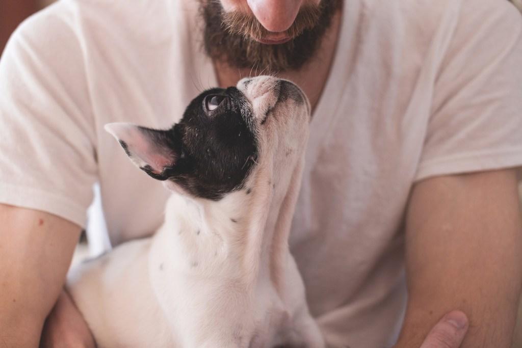 Man kann aber Hunden antrainieren, die Vorzeichen eines Anfalles zu riechen