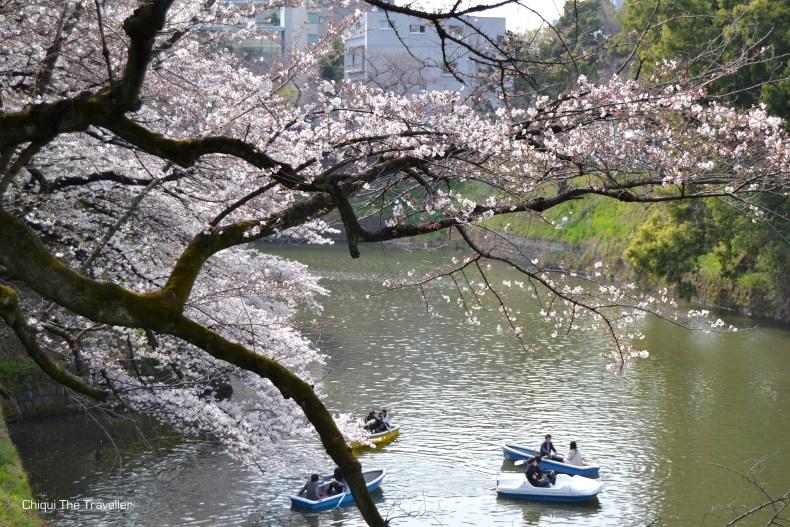 Chidorigafuchi Ryokudo sakura Tokio