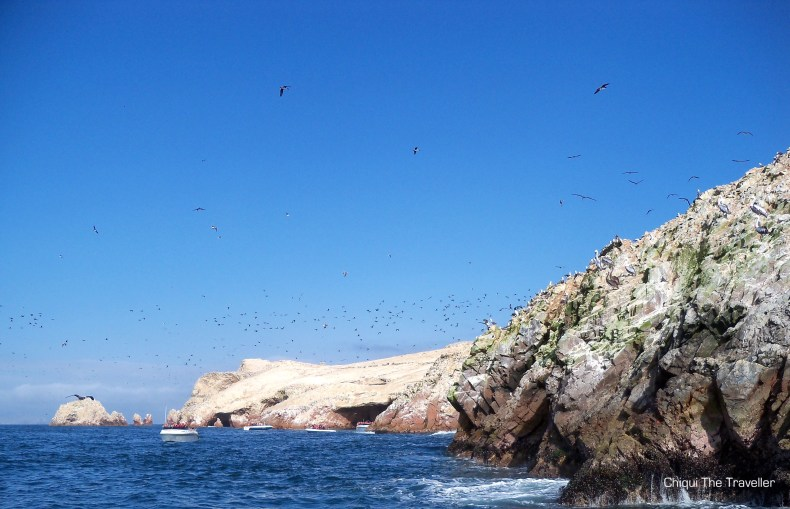 Guano Islas Ballestas Peru