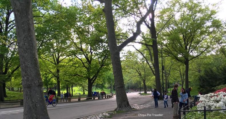 Central Park arboles Nueva York
