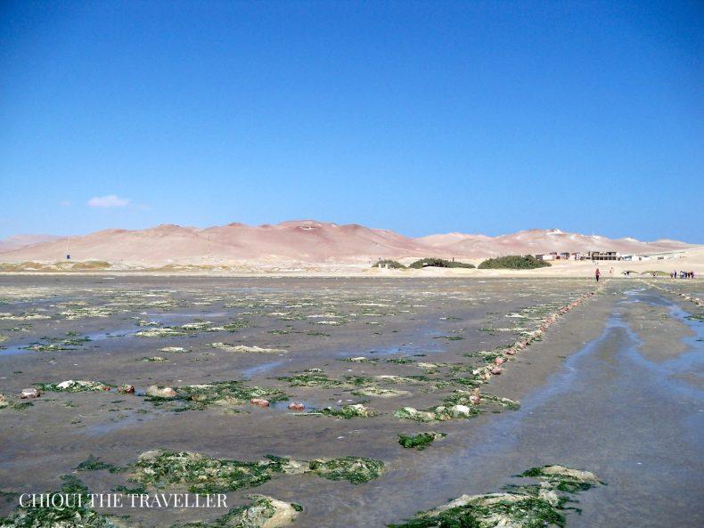 Humedales Paracas 2