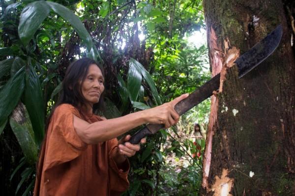 Indígenas piden consulta sobre manejo de bosques