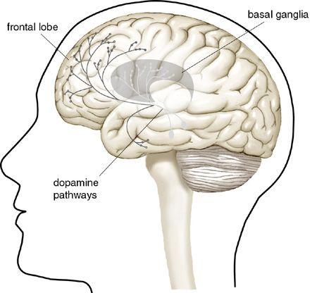 Image result for brain dopamine
