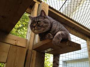 How to build a catio