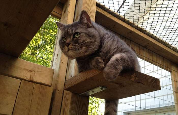 cat platform in catio